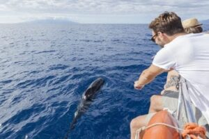 Tenerife Whales & Dolphins